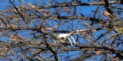 Что делать, если квадрокоптер застрял на дереве: способы решения проблемы