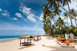 Почему стоит отправиться на Шри-ланку: главные достоинства курорта